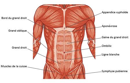 coupe-abdominale