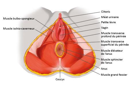 plan-anatomique-2