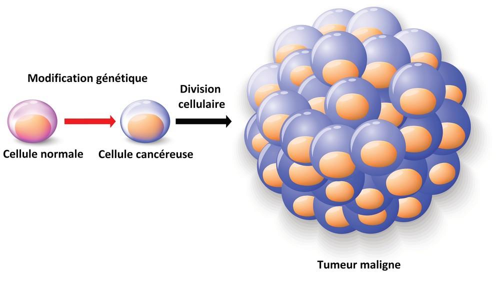 cancer cellule maligne)